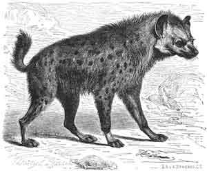 African-Folktales-Hyena-Wildmoz.com