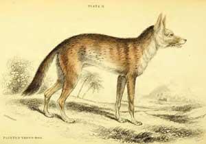 African-Folktales-Jackal-Wildmoz.com