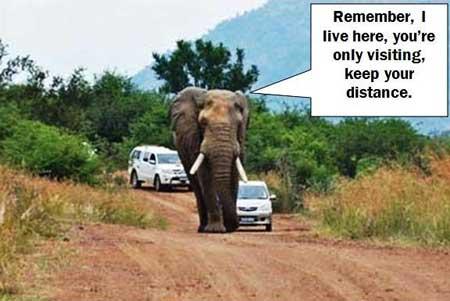 Elephant-Strole
