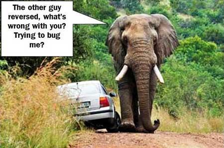 Elephant-Ramble