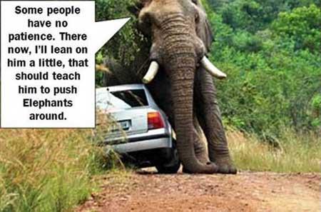 Elephant-Lean