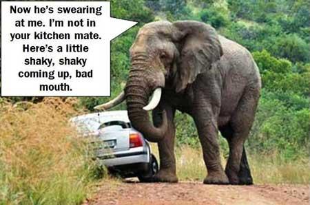 Elephant-Thinking