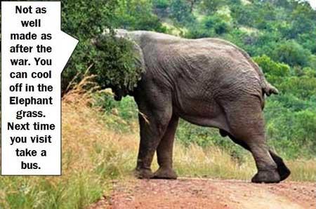 Elephant-Flipping