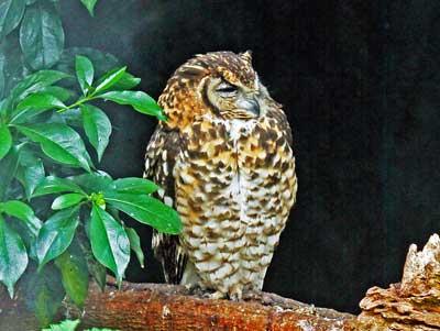 mountain-wilderness-cape-eagle-owl