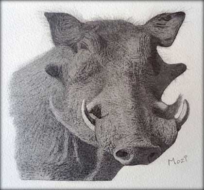 A-Warthog-Drawn-by-Mozi-Warthog