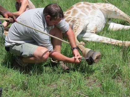 Giraffe-Pesky-Pot-