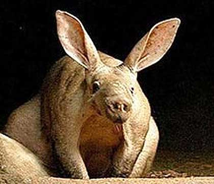 Aardvark-or-alien