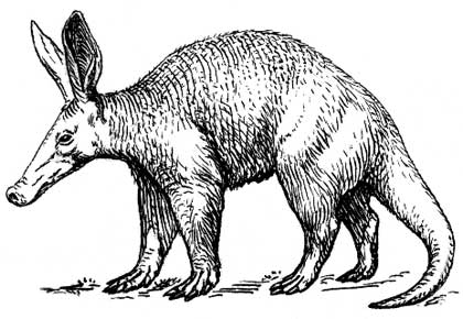 African-Aardvark-Anteater-Etching