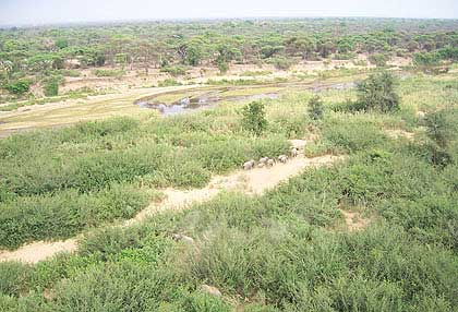 Bushveld-Elephants-River-Crossing
