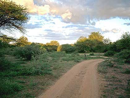 Timbavati-Bushveld-Two-Track-Road
