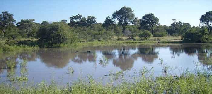 Timbavati-Bushveld-Water-Hole