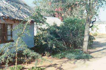 Timbavati-bush-camp-bungalow