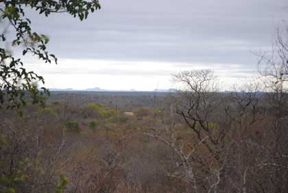 Web-Ranking-Bushveld-View-of-the-Kruger-Park