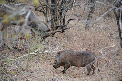 Web-Ranking-Kudu-vs-Warthog