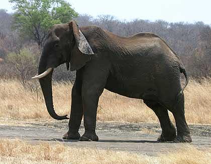 Elephant-On-His-Way