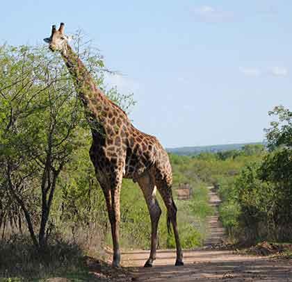 Bush-Animals-Africa
