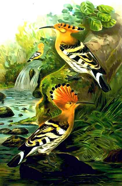 Hoopoe-Pair-Painting