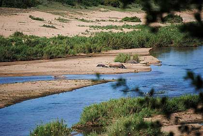 African-yard-bush-river