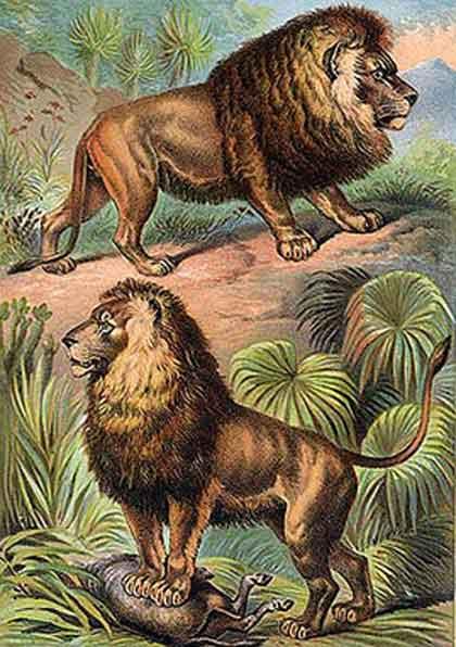 Leguaan-African-Lions-Wildmoz.com
