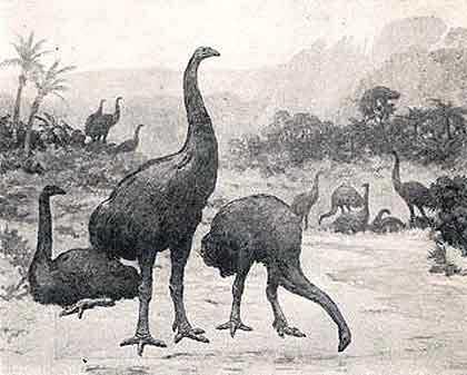 Elephant-bird-group-Wildmoz.com