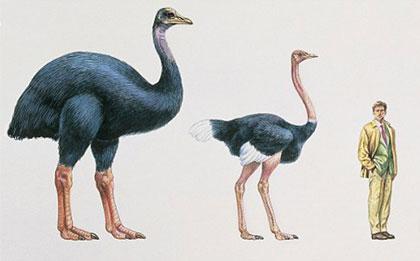 Elephant-Bird-Size-Wildmoz.com