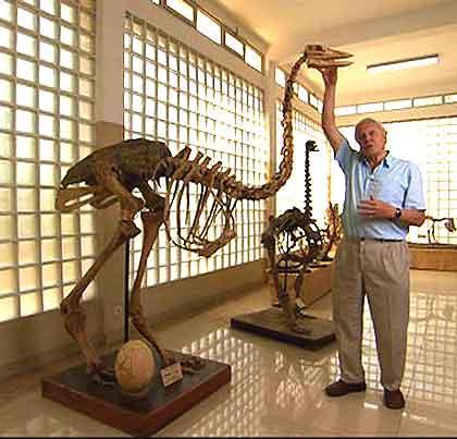 Elephant-Bird-Skeleton-Wildmoz.com