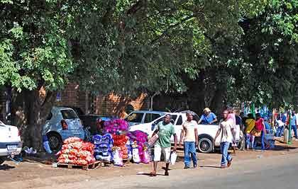 Christmas-Colorful-Africa-Wildmoz.com