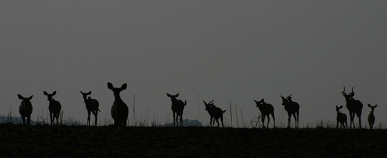 Bushveld-Babies-Kudu-Wildmoz.com