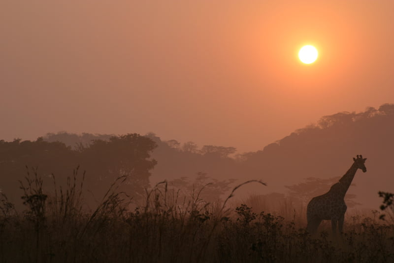 Misty-African-Sunrise-Wildmoz.com