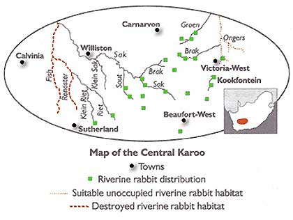 Riverine-Rabbit-Habitat-Wildmoz.com