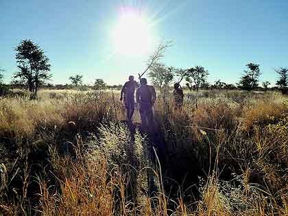 Mantis-Bushman-Tracking-Wildmoz.com