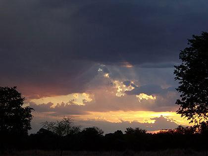 Bushveld-Birds-Wildmoz.com