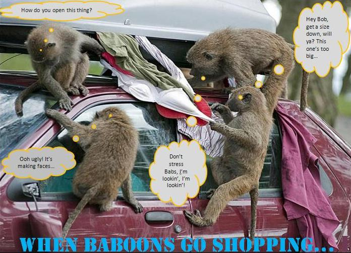 Baboons 4