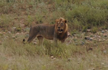 African-Folktale-the-Lion-Wildmoz.com