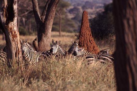 African-Folktail-the-Lion-Wildmoz.com