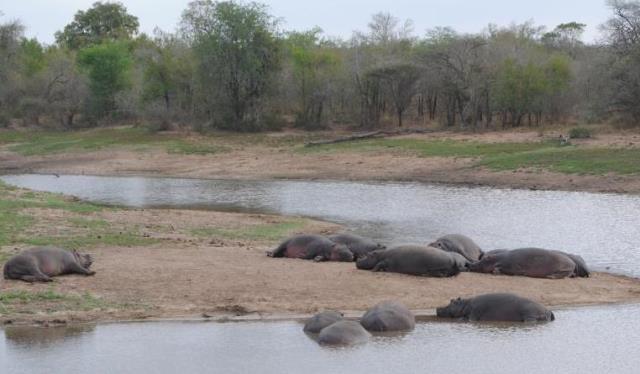 It-was-the-hippos-fault-Wildmoz.com