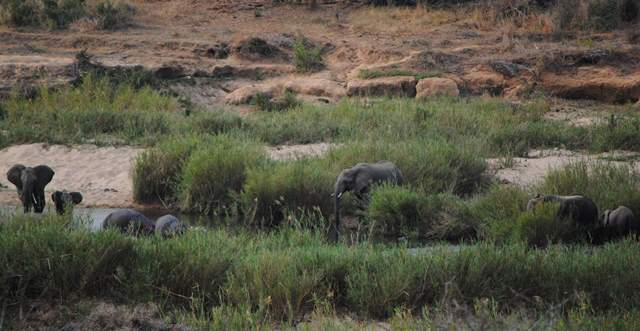 Elephants and hippos-Wildmoz.com