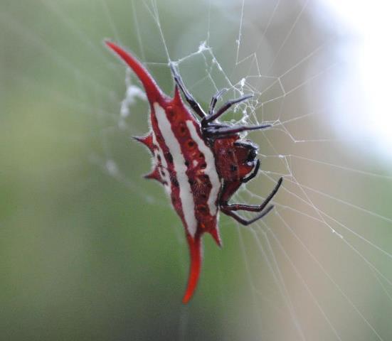 Pretty-Bugs-Spider-Wildmoz.com