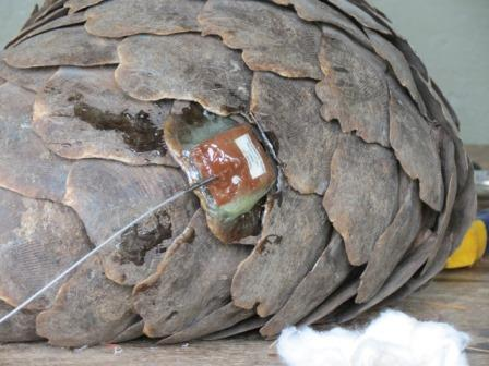 Pangolin-Epoxy-Radio-Wildmoz.com