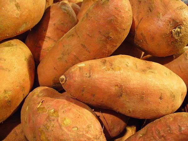 Pumpkin-Fritters-1-Wildmoz.com
