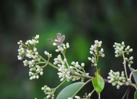Bushveld-wildlife-Butterfly-Shrub-Wildmoz.com