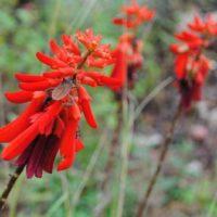 Bushveld Wildlife Fauna - Flora