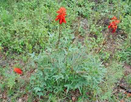 Bushveld-WIldlife-Red-Flowers-Wildmoz.com