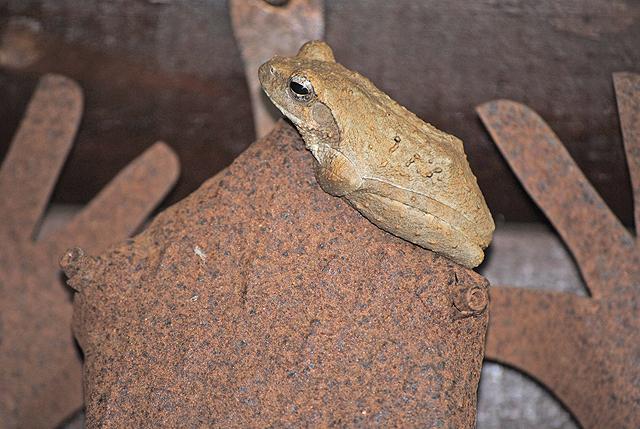 Froggy-Migrates-Wildmoz.com