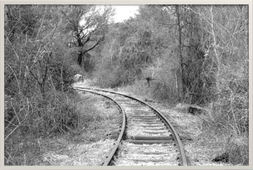Selati-Line-Rail-Sleepers-Wildmoz.com
