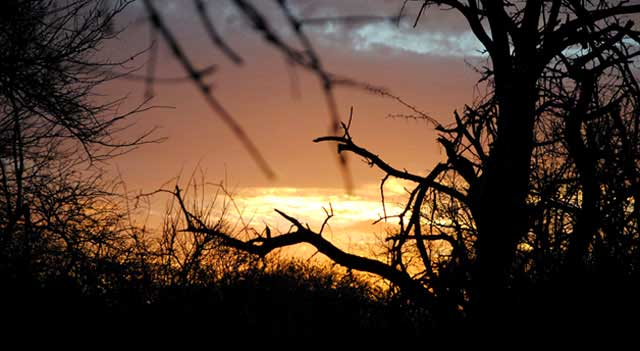 Everyday-Wildlife-Bushveld-Sunset-Wildmoz.com