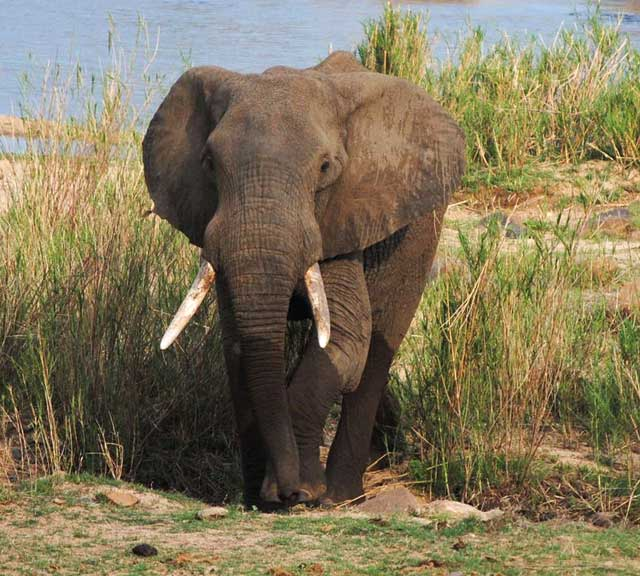 Elephant-dancing-wildmoz..com