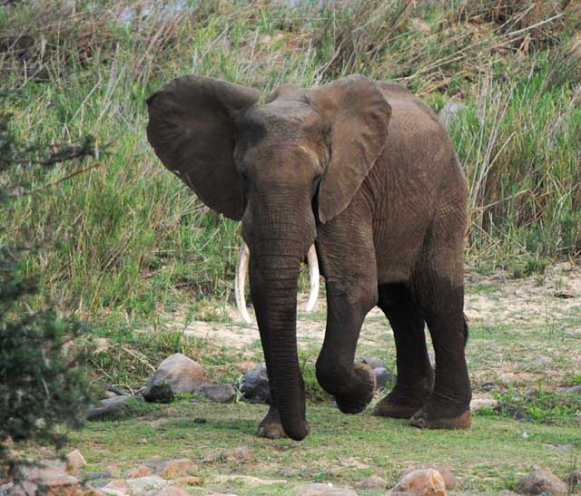 elephant-dancing-wildmoz.com