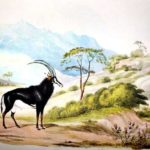 Sable Was Discovered in 1838