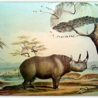 Zimbabwe Gives Away Black Rhino